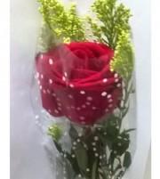 solitária Rosa no Celofane